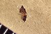 http://mczbase.mcz.harvard.edu/specimen_images/entomology/paleo/large/PALE-38629_Arthropoda.jpg