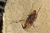 http://mczbase.mcz.harvard.edu/specimen_images/entomology/paleo/large/PALE-38653_Arthropoda.jpg