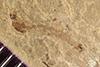 http://mczbase.mcz.harvard.edu/specimen_images/entomology/paleo/large/PALE-38663_Arthropoda.jpg