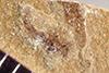 http://mczbase.mcz.harvard.edu/specimen_images/entomology/paleo/large/PALE-38670_Arthropoda.jpg