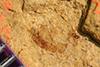 http://mczbase.mcz.harvard.edu/specimen_images/entomology/paleo/large/PALE-38736_Arthropoda.jpg