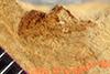 http://mczbase.mcz.harvard.edu/specimen_images/entomology/paleo/large/PALE-38747_Arthropoda.jpg