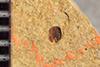 http://mczbase.mcz.harvard.edu/specimen_images/entomology/paleo/large/PALE-38748b_Arthropoda.jpg