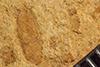 http://mczbase.mcz.harvard.edu/specimen_images/entomology/paleo/large/PALE-38767_Arthropoda.jpg