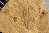 http://mczbase.mcz.harvard.edu/specimen_images/entomology/paleo/large/PALE-38795_Arthropoda.jpg
