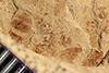 http://mczbase.mcz.harvard.edu/specimen_images/entomology/paleo/large/PALE-38814_Arthropoda.jpg