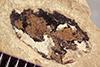 http://mczbase.mcz.harvard.edu/specimen_images/entomology/paleo/large/PALE-38827_Arthropoda.jpg