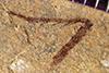 http://mczbase.mcz.harvard.edu/specimen_images/entomology/paleo/large/PALE-38870_Arthropoda.jpg