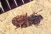 http://mczbase.mcz.harvard.edu/specimen_images/entomology/paleo/large/PALE-38880_Arthropoda.jpg