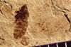 http://mczbase.mcz.harvard.edu/specimen_images/entomology/paleo/large/PALE-38901_Arthropoda.jpg