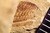 http://mczbase.mcz.harvard.edu/specimen_images/entomology/paleo/large/PALE-38908_Arthropoda.jpg
