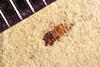 http://mczbase.mcz.harvard.edu/specimen_images/entomology/paleo/large/PALE-38936_Arthropoda.jpg