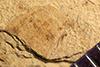 http://mczbase.mcz.harvard.edu/specimen_images/entomology/paleo/large/PALE-38985_Arthropoda.jpg