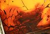 http://mczbase.mcz.harvard.edu/specimen_images/entomology/paleo/large/PALE-3902_Hemerobites_antiquus_cotype.jpg