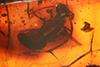 http://mczbase.mcz.harvard.edu/specimen_images/entomology/paleo/large/PALE-3903_Hemerobites_antiquus_cotype.jpg