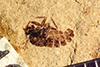 http://mczbase.mcz.harvard.edu/specimen_images/entomology/paleo/large/PALE-39054_Arthropoda.jpg