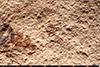 http://mczbase.mcz.harvard.edu/specimen_images/entomology/paleo/large/PALE-3906_Psyllites_crawfordi_holotype_1.jpg