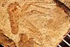 http://mczbase.mcz.harvard.edu/specimen_images/entomology/paleo/large/PALE-3909_Empis_miocenica_type.jpg