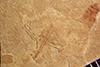 http://mczbase.mcz.harvard.edu/specimen_images/entomology/paleo/large/PALE-39128_Arthropoda.jpg