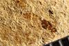 http://mczbase.mcz.harvard.edu/specimen_images/entomology/paleo/large/PALE-39131_Arthropoda.jpg