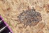 http://mczbase.mcz.harvard.edu/specimen_images/entomology/paleo/large/PALE-39203_Arthropoda.jpg