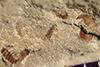 http://mczbase.mcz.harvard.edu/specimen_images/entomology/paleo/large/PALE-39289_Arthropoda.jpg