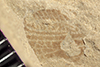 http://mczbase.mcz.harvard.edu/specimen_images/entomology/paleo/large/PALE-39348_Arthropoda.jpg