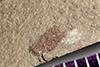 http://mczbase.mcz.harvard.edu/specimen_images/entomology/paleo/large/PALE-39358_Arthropoda.jpg