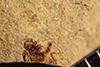 http://mczbase.mcz.harvard.edu/specimen_images/entomology/paleo/large/PALE-39416_Arthropoda.jpg