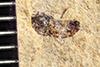 http://mczbase.mcz.harvard.edu/specimen_images/entomology/paleo/large/PALE-39425_Arthropoda.jpg