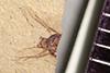 http://mczbase.mcz.harvard.edu/specimen_images/entomology/paleo/large/PALE-39461_Arthropoda.jpg