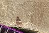 http://mczbase.mcz.harvard.edu/specimen_images/entomology/paleo/large/PALE-39480_Arthropoda.jpg
