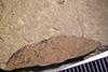 http://mczbase.mcz.harvard.edu/specimen_images/entomology/paleo/large/PALE-39483_Arthropoda.jpg