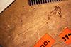 http://mczbase.mcz.harvard.edu/specimen_images/entomology/paleo/large/PALE-394_Agrion_mascescens_holotype_2_(cp_4112).jpg
