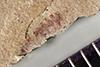 http://mczbase.mcz.harvard.edu/specimen_images/entomology/paleo/large/PALE-39536_Arthropoda.jpg
