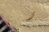 http://mczbase.mcz.harvard.edu/specimen_images/entomology/paleo/large/PALE-39563_Arthropoda.jpg
