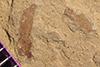 http://mczbase.mcz.harvard.edu/specimen_images/entomology/paleo/large/PALE-39603_Arthropoda.jpg