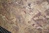 http://mczbase.mcz.harvard.edu/specimen_images/entomology/paleo/large/PALE-39611_Arthropoda.jpg