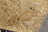 http://mczbase.mcz.harvard.edu/specimen_images/entomology/paleo/large/PALE-39678_Arthropoda.jpg