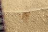 http://mczbase.mcz.harvard.edu/specimen_images/entomology/paleo/large/PALE-39724_Arthropoda.jpg