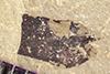 http://mczbase.mcz.harvard.edu/specimen_images/entomology/paleo/large/PALE-39750_Arthropoda.jpg