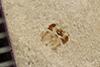 http://mczbase.mcz.harvard.edu/specimen_images/entomology/paleo/large/PALE-39753_Arthropoda.jpg