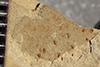 http://mczbase.mcz.harvard.edu/specimen_images/entomology/paleo/large/PALE-39802_Arthropoda.jpg