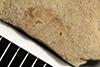 http://mczbase.mcz.harvard.edu/specimen_images/entomology/paleo/large/PALE-39803_Arthropoda.jpg