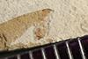 http://mczbase.mcz.harvard.edu/specimen_images/entomology/paleo/large/PALE-39804_Arthropoda.jpg