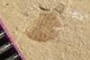 http://mczbase.mcz.harvard.edu/specimen_images/entomology/paleo/large/PALE-39827_Arthropoda.jpg