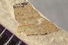 http://mczbase.mcz.harvard.edu/specimen_images/entomology/paleo/large/PALE-39991_Arthropoda.jpg