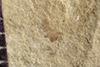 http://mczbase.mcz.harvard.edu/specimen_images/entomology/paleo/large/PALE-40034_Arthropoda.jpg