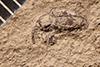 http://mczbase.mcz.harvard.edu/specimen_images/entomology/paleo/large/PALE-4021_Centrinus_obnuptus_type.jpg