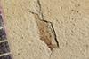 http://mczbase.mcz.harvard.edu/specimen_images/entomology/paleo/large/PALE-40233_Arthropoda.jpg